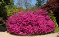 Pink Flowering Bushes And Shrubs  6 Cool Wallpaper