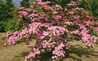 Pink Flowering Bushes And Shrubs  7 Free Hd Wallpaper