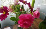 Pink Rose Flower Essence  20 Cool Hd Wallpaper