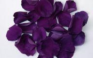 Purple Rose Flowers  2 Wide Wallpaper
