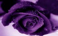 Purple Rose Flowers  3 Background Wallpaper