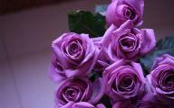 Purple Rose Flowers  8 Desktop Wallpaper