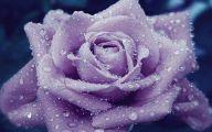 Purple Rose Flowers  9 Background Wallpaper