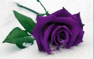 Purple Rose Like Flower  23 Background