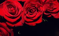 Red And Black Flower  8 Free Hd Wallpaper