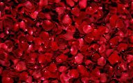 Red Rose Flower Images  7 Cool Hd Wallpaper
