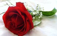 Red Rose Flower Images  8 Wide Wallpaper