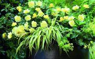 Rose Flower Carpet Yellow  20 Hd Wallpaper