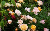 Rose Flower Carpet Yellow  32 Hd Wallpaper