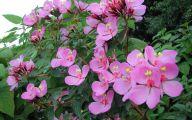 Tall Pink Flowers  18 Desktop Background