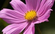 Tall Pink Flowers  29 Free Hd Wallpaper