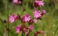 Tall Pink Flowers  31 Free Hd Wallpaper