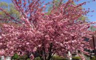 Tree With Pink Flowers  13 Free Hd Wallpaper