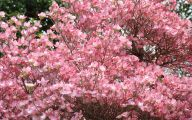 Tree With Pink Flowers  14 Widescreen Wallpaper
