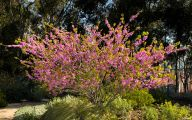 Tree With Pink Flowers  18 High Resolution Wallpaper