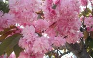 Tree With Pink Flowers  20 Cool Wallpaper