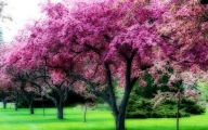 Tree With Pink Flowers  21 Desktop Background