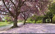 Tree With Pink Flowers  7 Cool Wallpaper