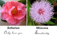 Types Of Pink Flowers  10 Cool Wallpaper