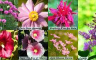 Types Of Pink Flowers  16 Wide Wallpaper