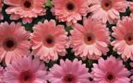 Types Of Pink Flowers  3 High Resolution Wallpaper