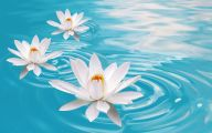 White Flowers Colored Water  28 Wide Wallpaper