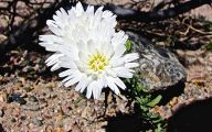 White Flowers Death  25 Cool Wallpaper