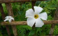 White Flowers Death  26 Desktop Wallpaper