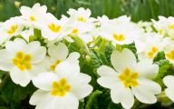 White Flowers Download  12 Widescreen Wallpaper