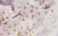 White Flowers Download  16 Background Wallpaper