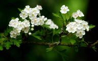 White Flowers Download  19 Background