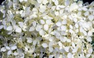 White Flowers Download  6 Cool Wallpaper