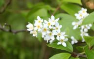 White Flowers Early Summer  1 Hd Wallpaper