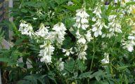 White Flowers Early Summer  10 Desktop Background