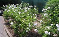 White Rose Flower  49 Desktop Background