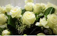 White Rose Flower Arrangements  29 Free Hd Wallpaper