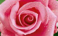 White Rose Flower Essence  22 High Resolution Wallpaper