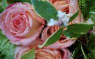 White Rose Flower Essence  30 Free Hd Wallpaper