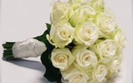 White Rose Flower Wiki  3 Widescreen Wallpaper