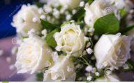 White Rose Flower Wiki  7 Free Wallpaper