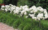 White Rose Like Flower  8 High Resolution Wallpaper