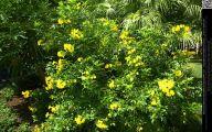 Yellow Flower Bush  11 Background Wallpaper