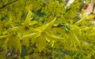 Yellow Flower Bush  19 High Resolution Wallpaper