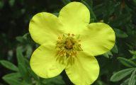 Yellow Flower Bush  21 Widescreen Wallpaper
