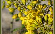 Yellow Flower Bush  22 Hd Wallpaper