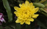 Yellow Flower Pictures  1 High Resolution Wallpaper