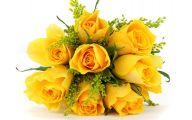 Yellow Rose Flowers  6 Cool Wallpaper