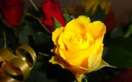 Yellow Rose Flowers Images  2 Desktop Background