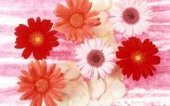 Beautiful Flower Wallpaper 10 Hd Wallpaper