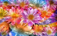Beautiful Flower Wallpaper 12 Cool Wallpaper